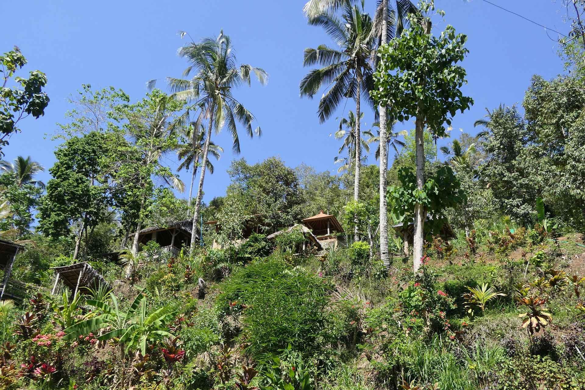 Eco Lodge in Bali